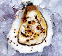 Raw Oysters with Lemon Oil and Urfa Biber